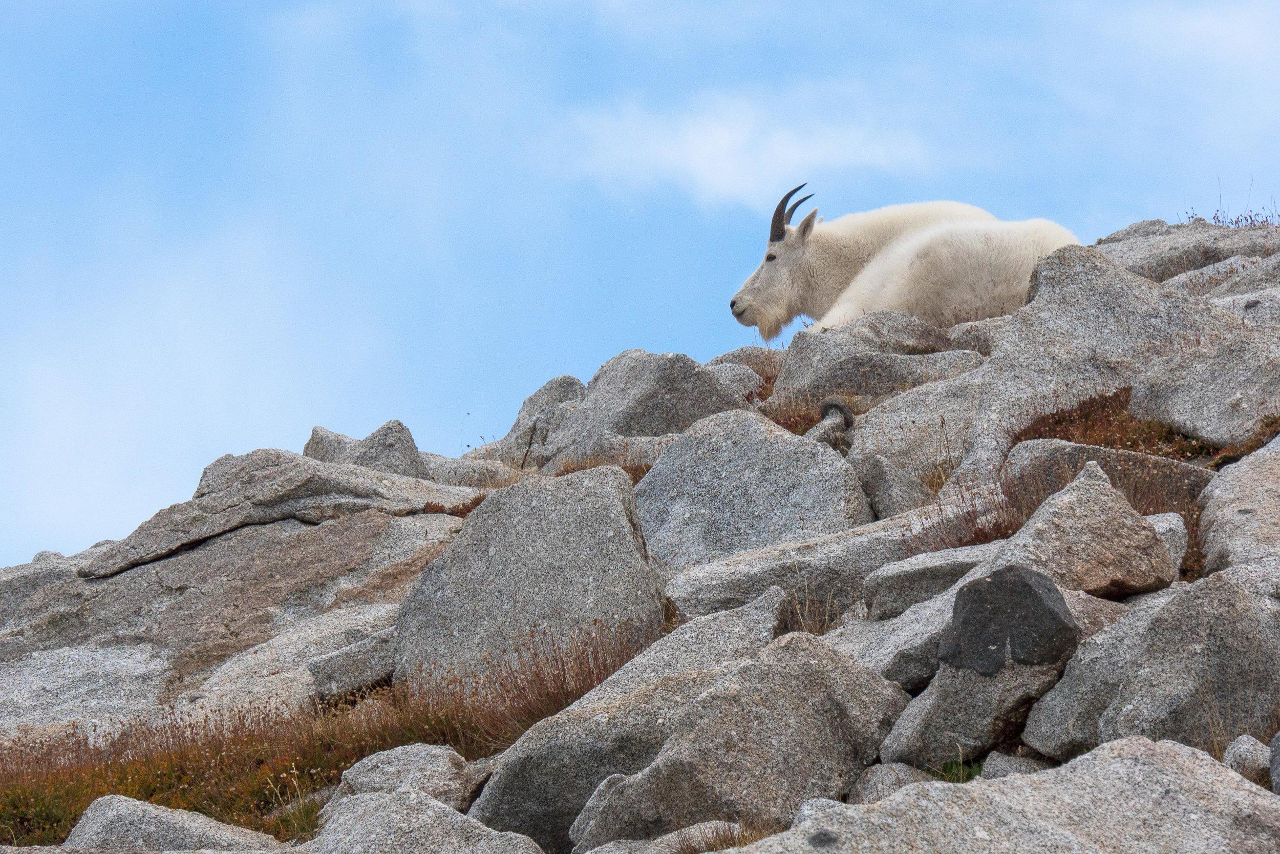 2016 - King of the Mountain, Lone Peak Wilderness