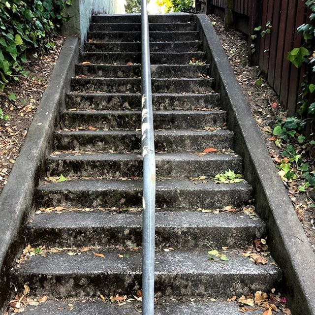 This is a subtle image - it's a stairway, a midblock access point between two streets that would otherwise not connect. It's in Piedmont, it's one of many walking paths that are found in the East Bay, which are part of the public transit ethos and walkable design from Key Route (streetcar) days. These are still used by walkers and runners. And, this seems to be the approach, from the bottom to the top from what I see as subtle evidence in the photo. We are in the US, so we tend to pick the right side of rail when going up the stairs. It's a trace... a subtle one, where the moss and dirt on the right side going up have been polished off a little more, from the other walkers and runners who tend to go this direction as well. Now, why is the rail in the middle? Well, we wouldn't be doing that any more these days, nor is this ADA accessible, but I wouldn't want them to take it away. It is way better than going all the way around the block.