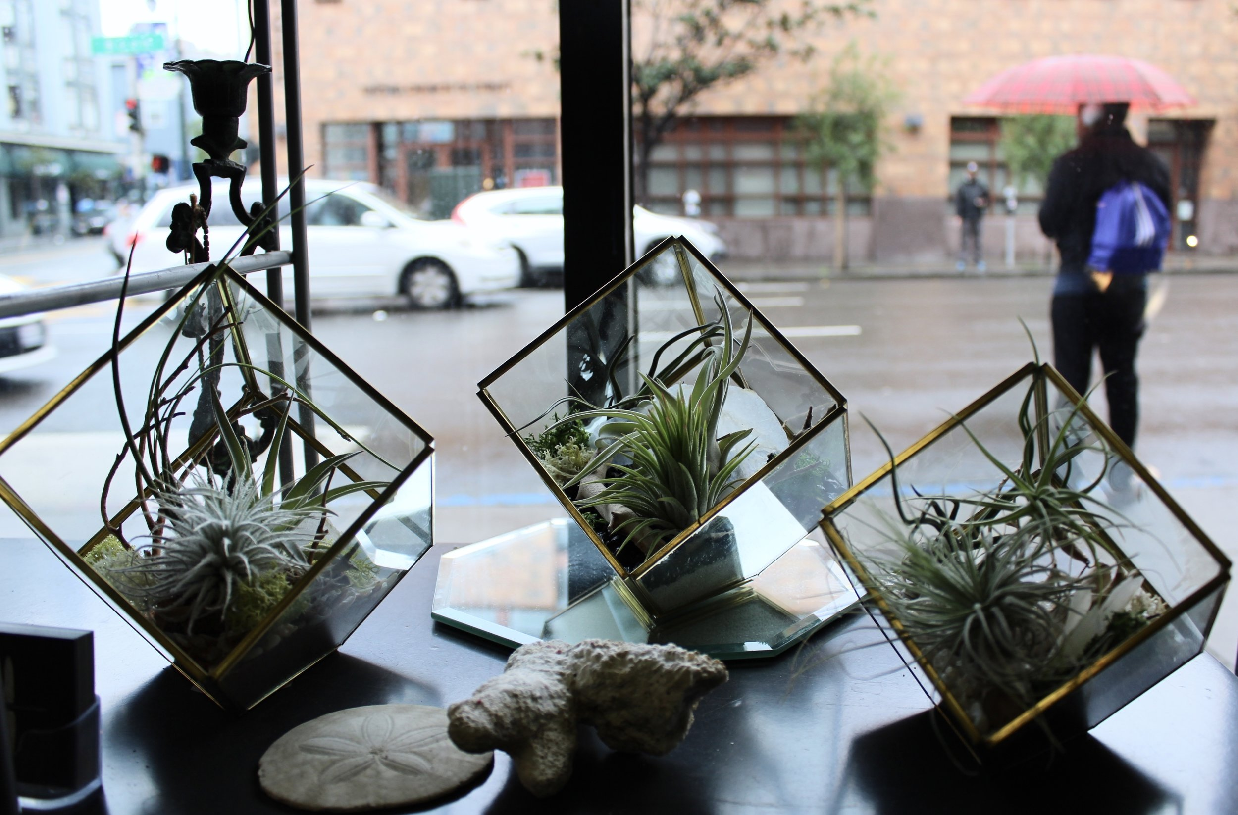 Air Plants in Glass Jars