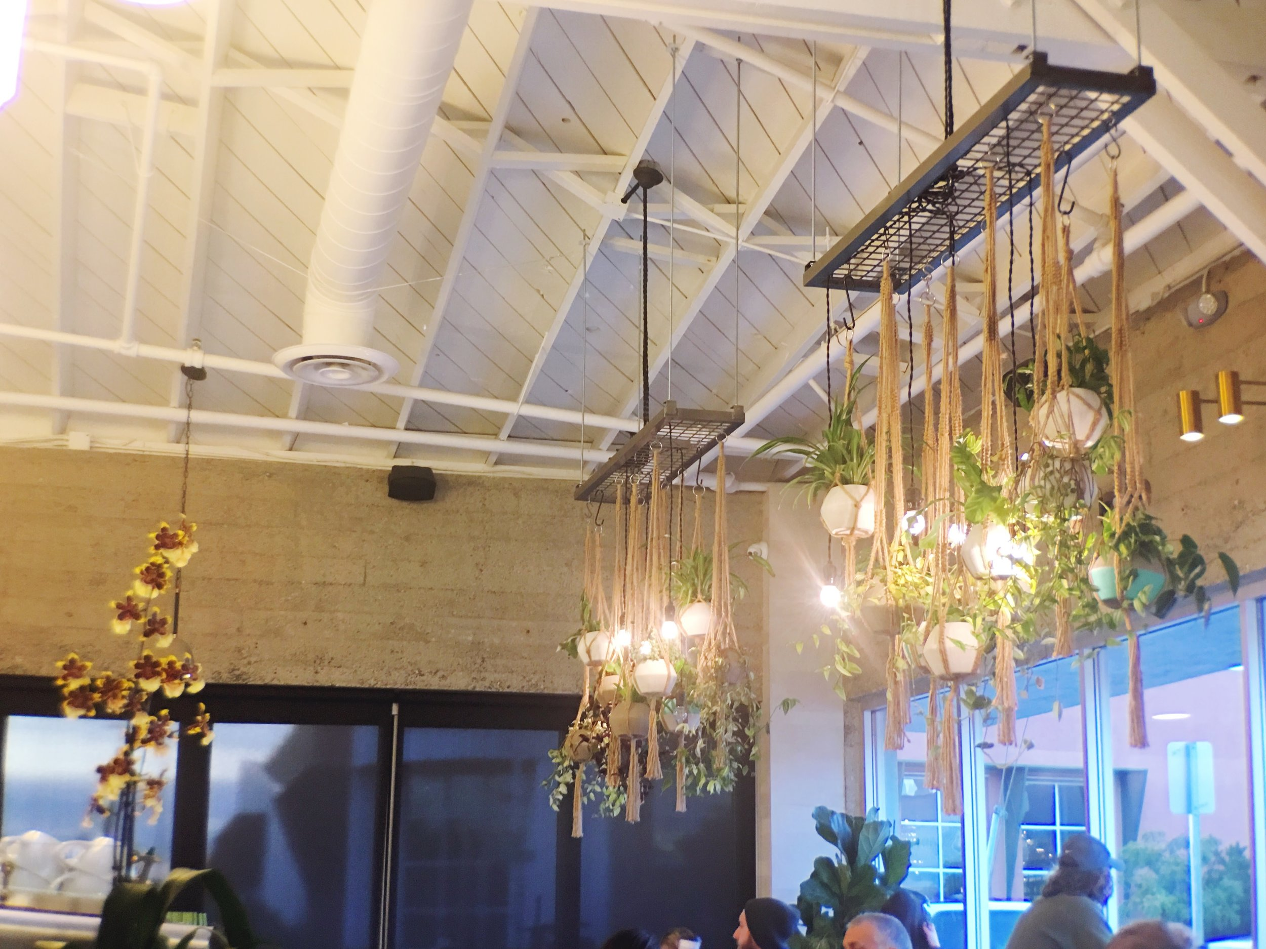 Hanging Lights decorated with plants at Verve Coffee Roasters in Santa Cruz, CA.