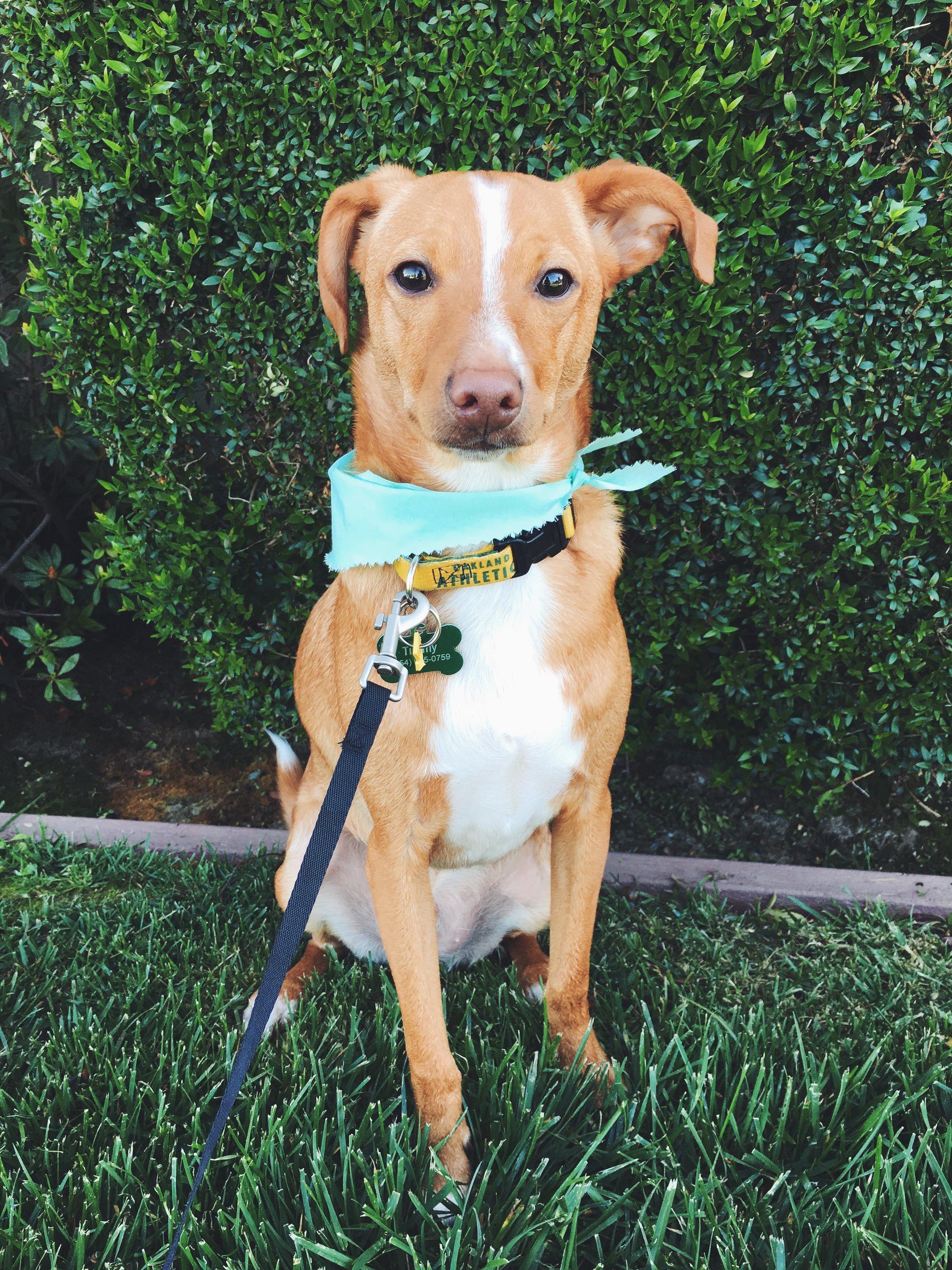 Rescue Pup Timmy Riggins