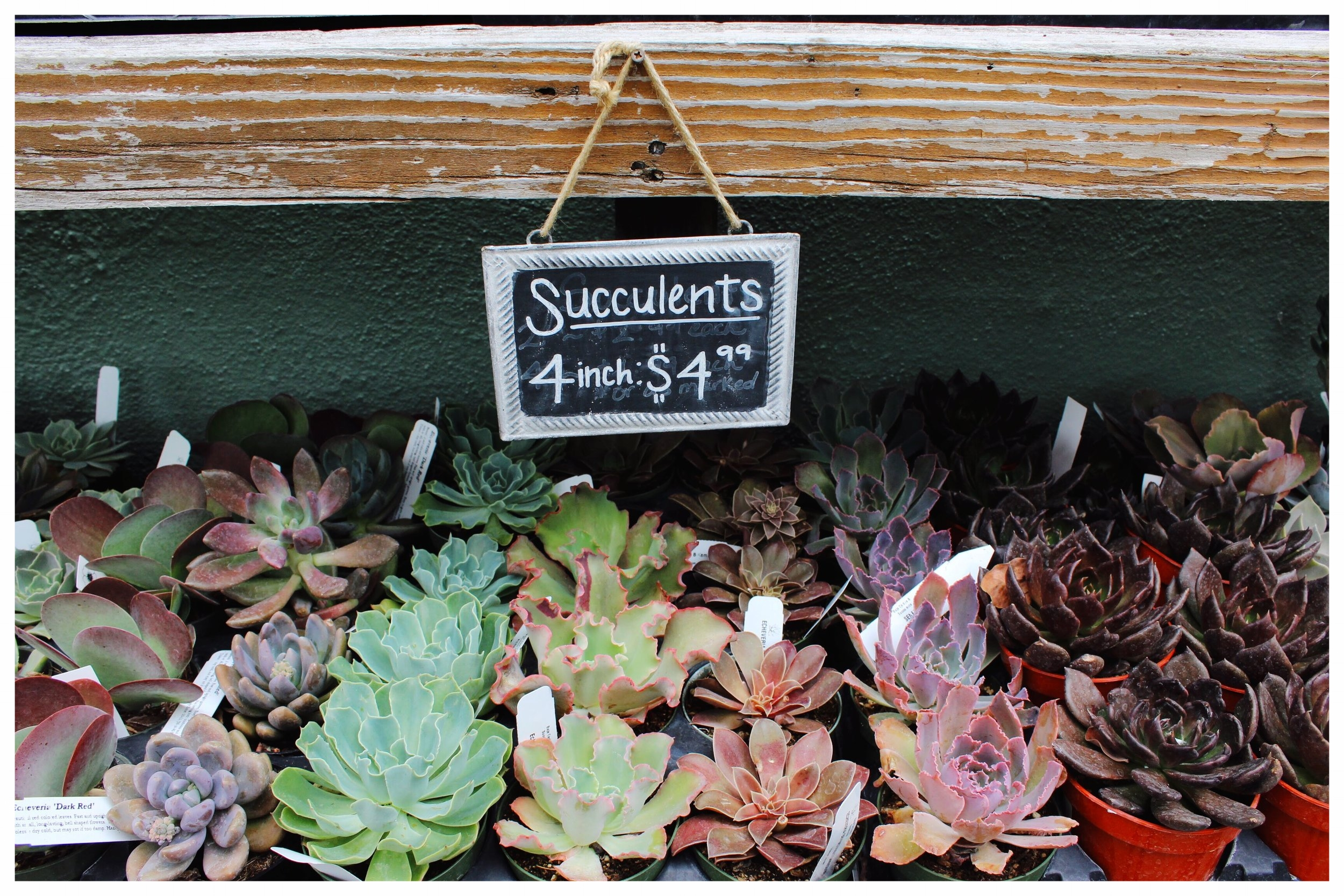 Succulents from Dig Gardens
