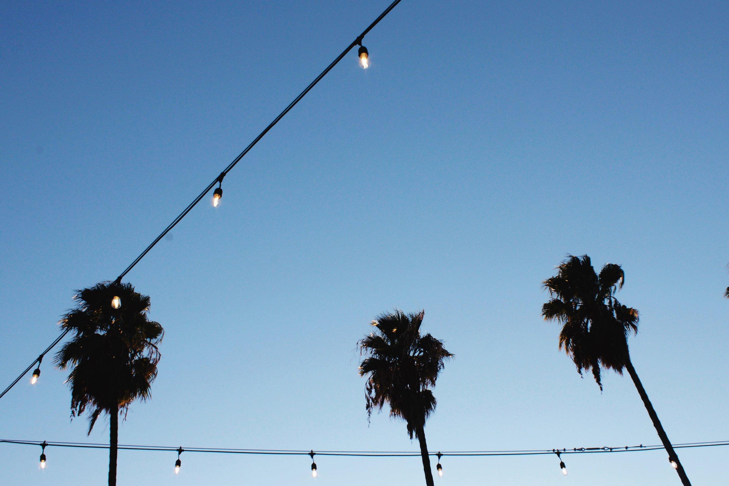 Oak Park California night palm trees