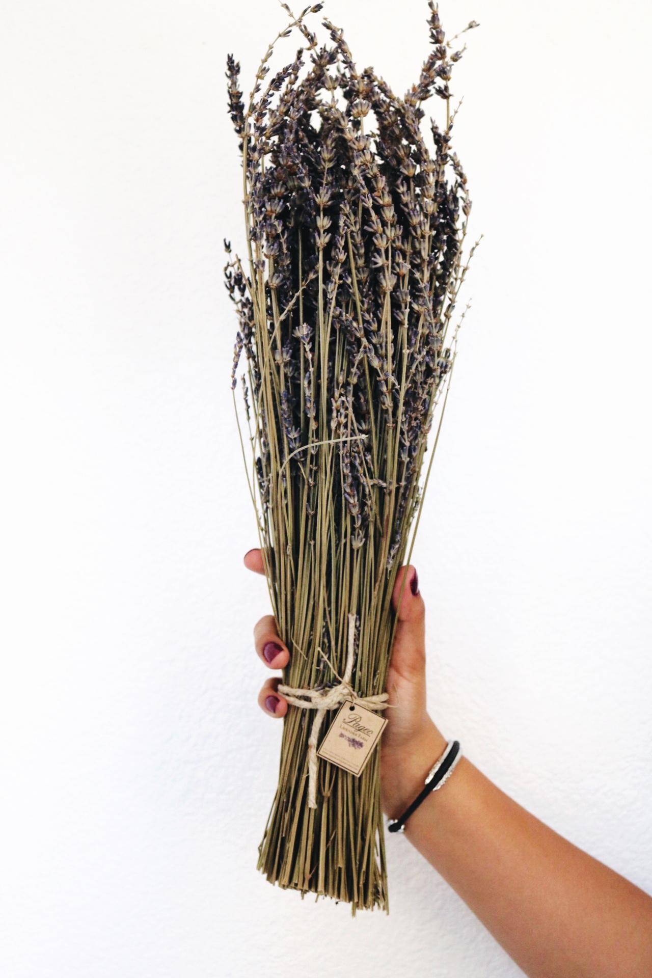 Pageo Lavender farm Maria Shireen bracelet