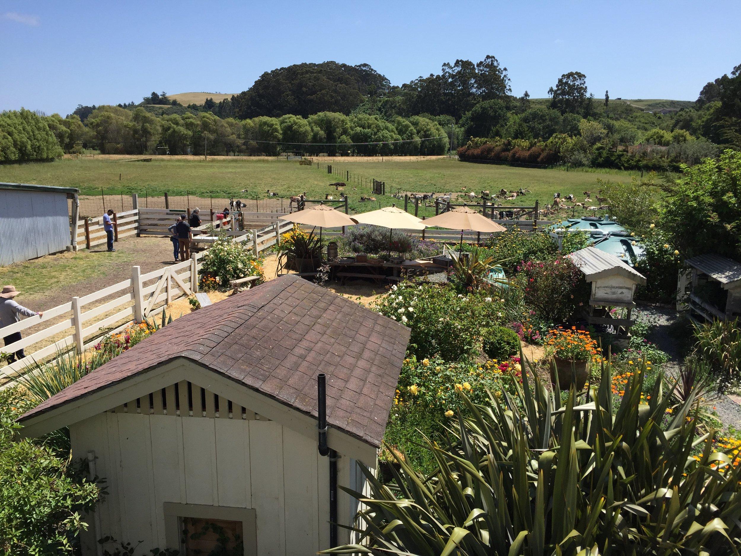 Goat farm yard.JPG