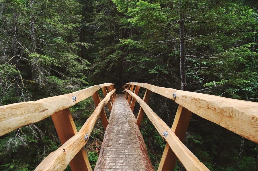 Forest Project Bainbridge Island