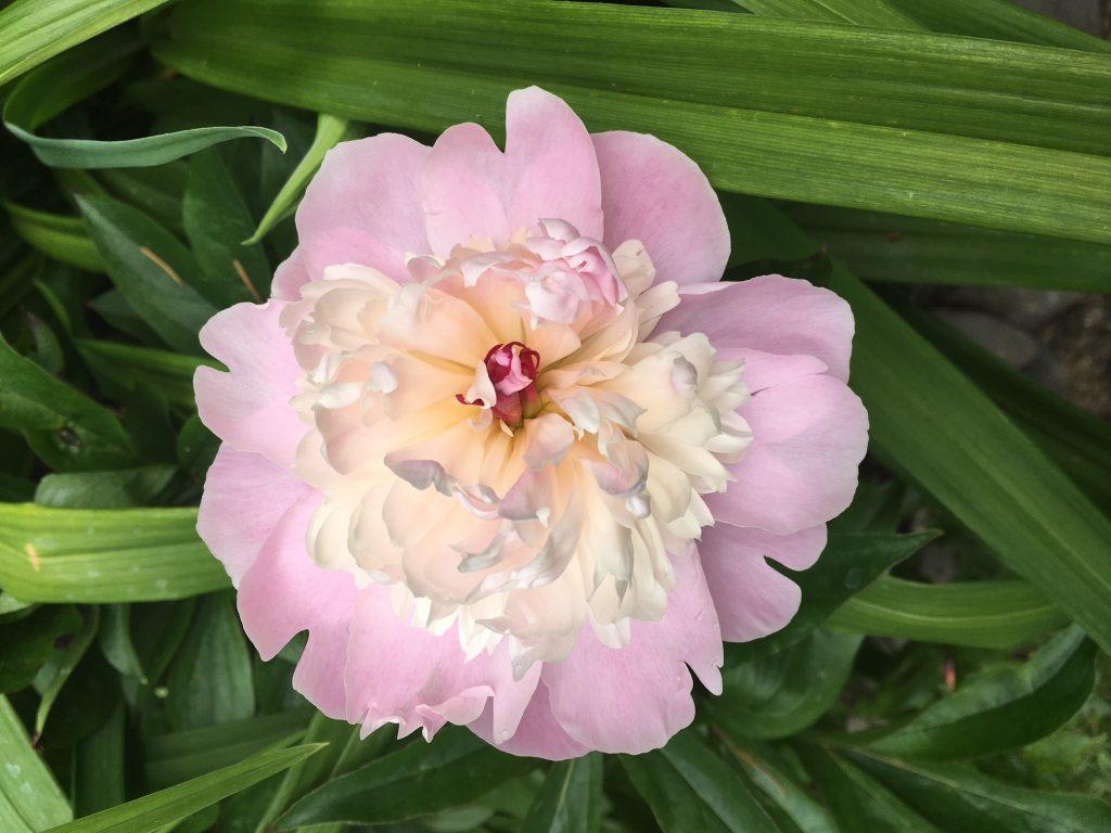 Pink-Flower-1024x768.jpg