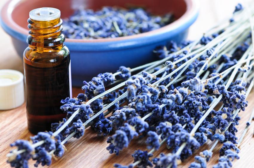 lavender oi.jpg