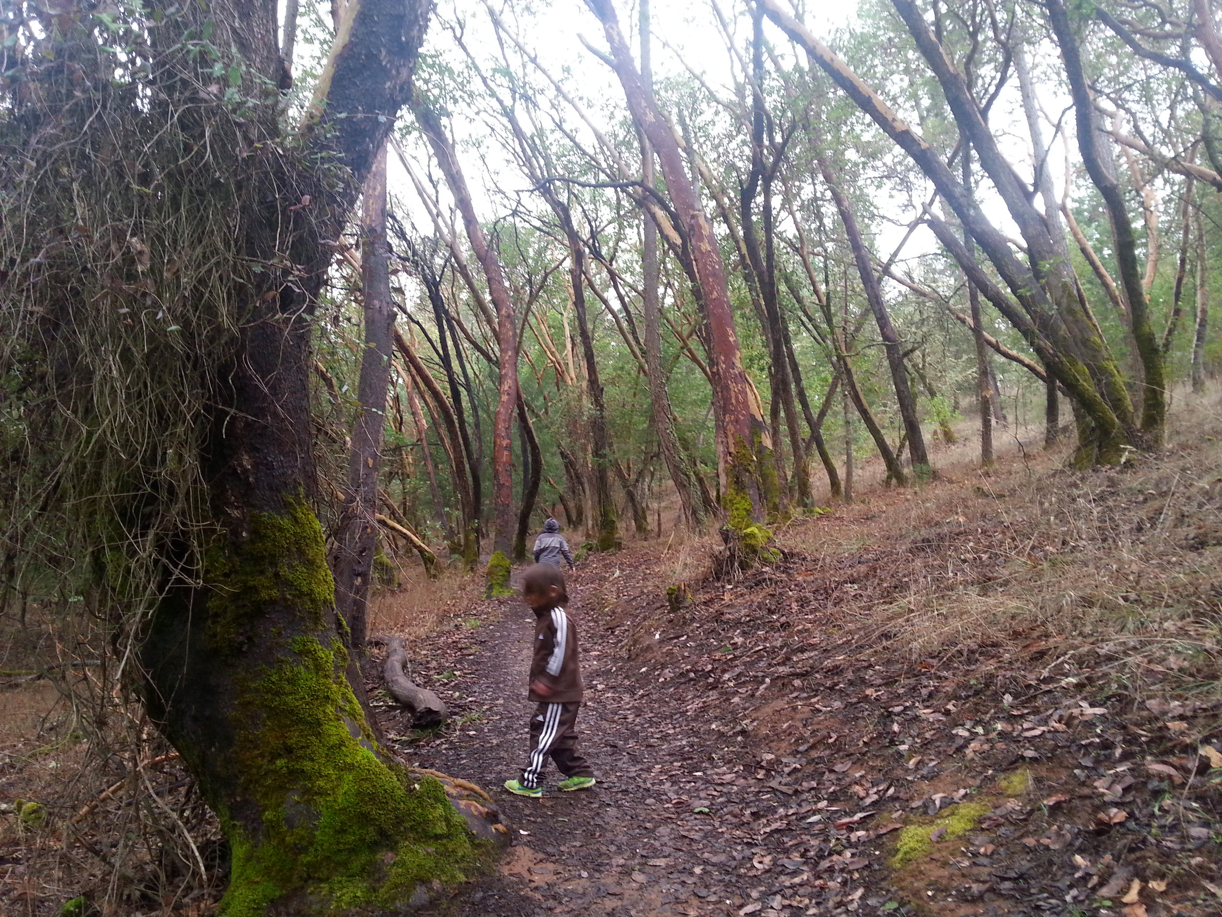 Beekman Trail, Jacksonville, Oregon - Rogue Valley - Jackson County - Southern Oregon (2).jpg