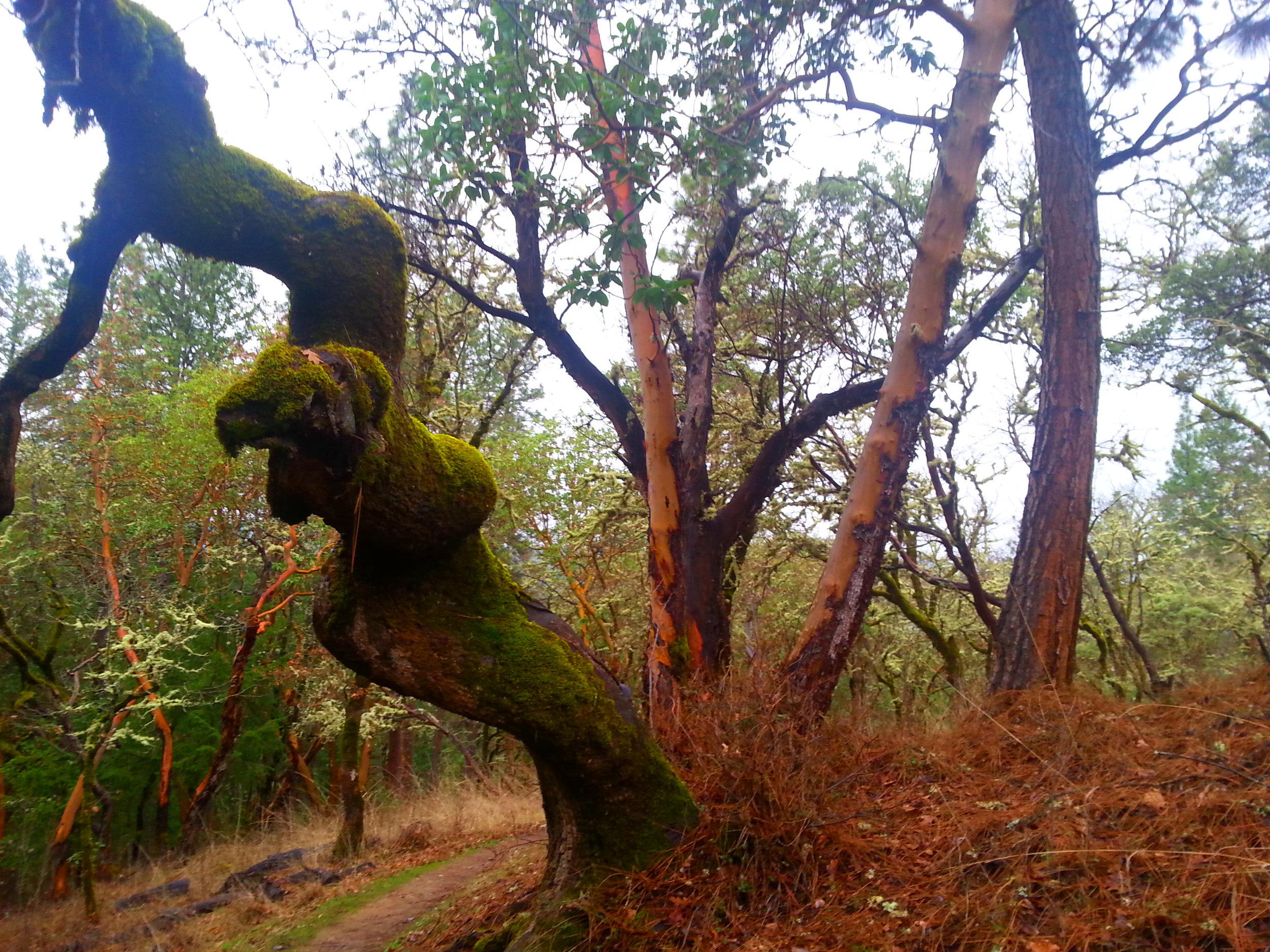 Beekman Trail, Jacksonville, Oregon - Rogue Valley - Jackson County - Southern Oregon (6).jpg