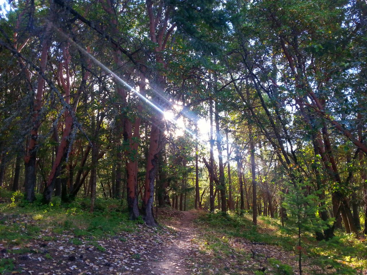 Beebe Woods - Jacksonville - Hiking.png