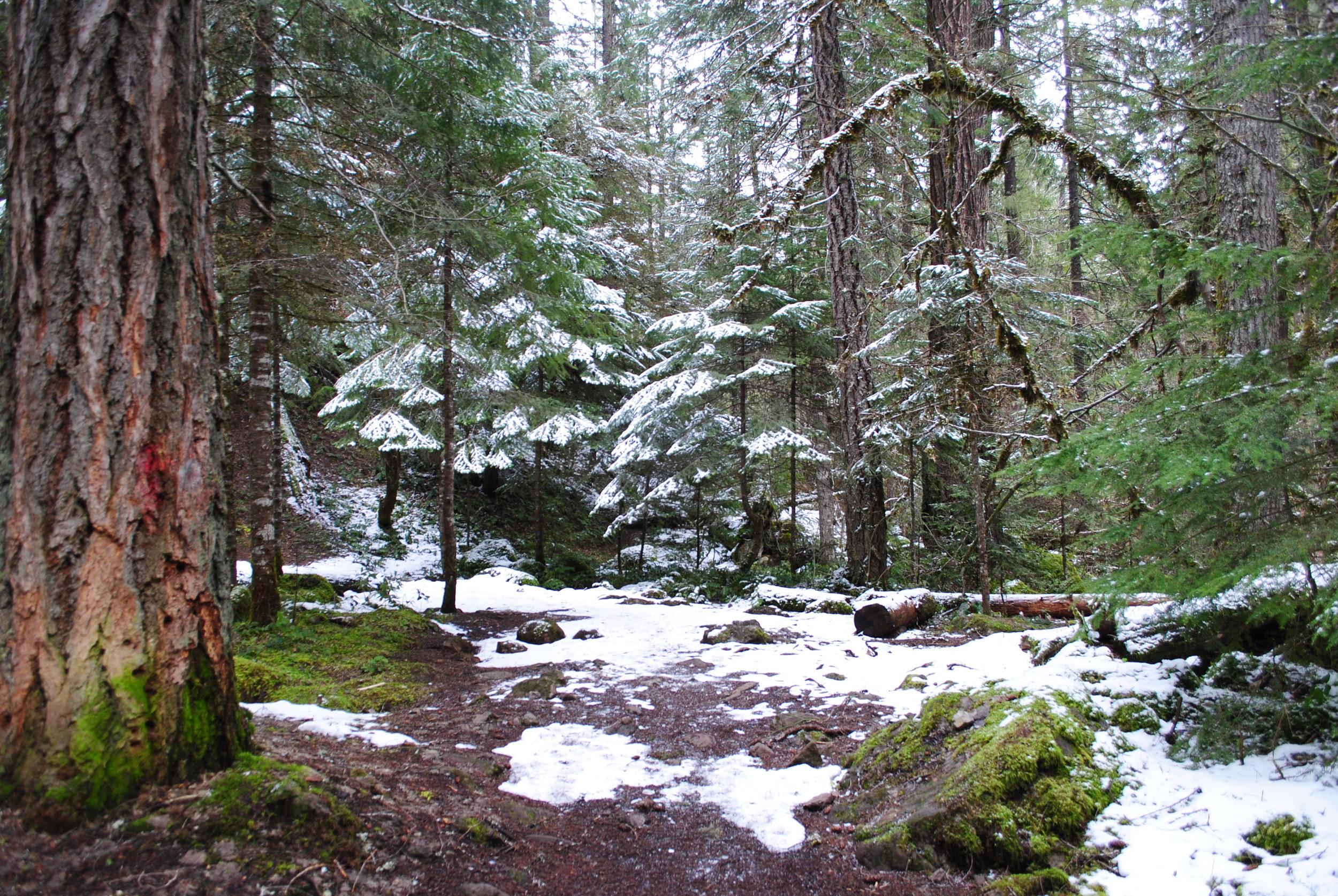 UMPQUA HOT SPRINGS - What to do in Southern Oregon- Things to do in Roseburg - Diamond Lake - Events Calendar (21).JPG