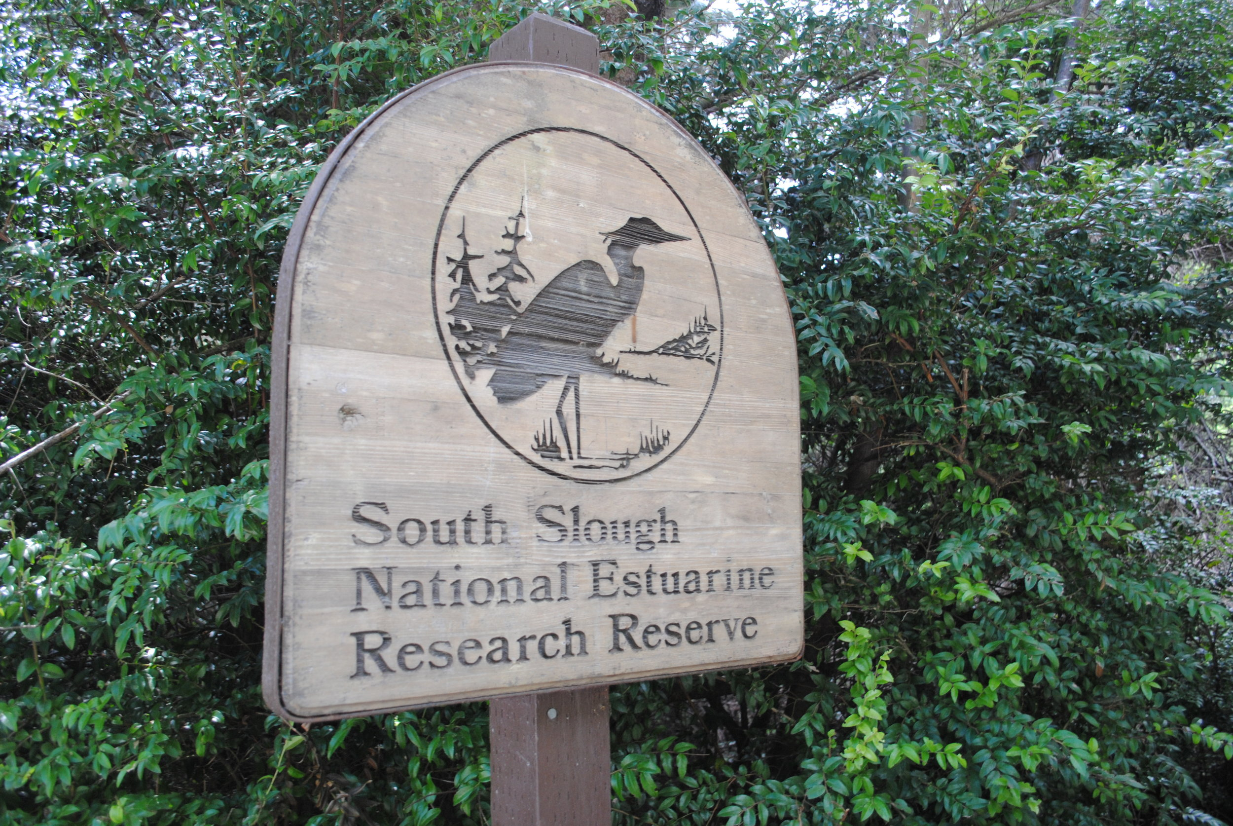 SOUTH SLOUGH ESTUARY - Charleston, Oregon- What to do in Southern Oregon - Things to do in Bandon