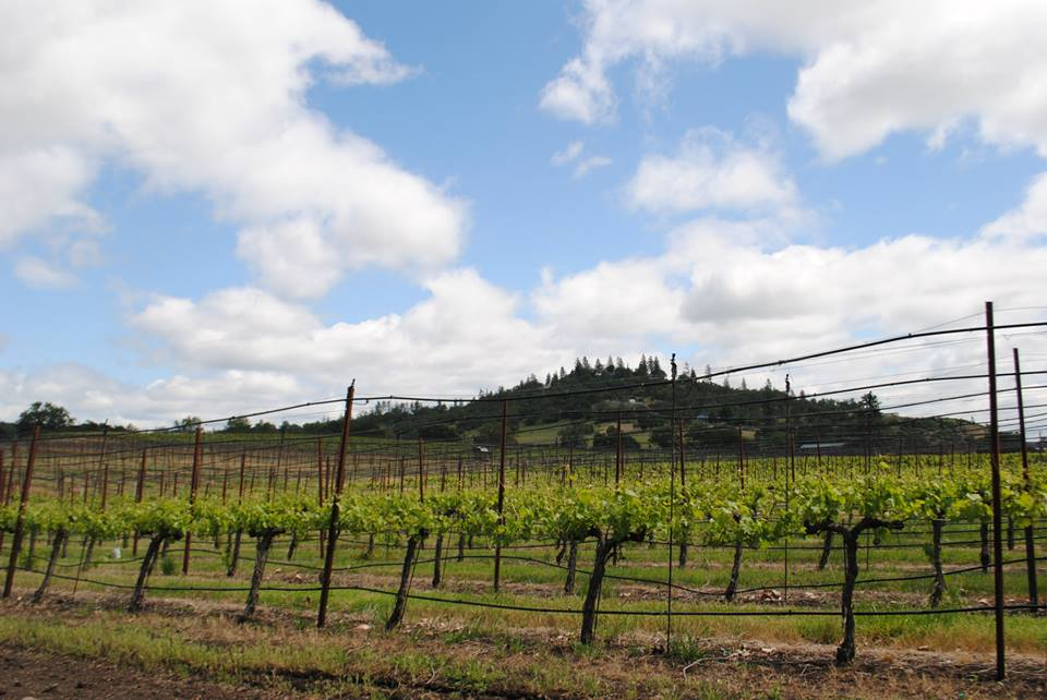 ROAM THE ROGUE - Seven Wineries, One Day - What to do in Southern Oregon - Things to do - Wine Tasting  - Upper Rogue Wine Trail - The View at Agate Ridge
