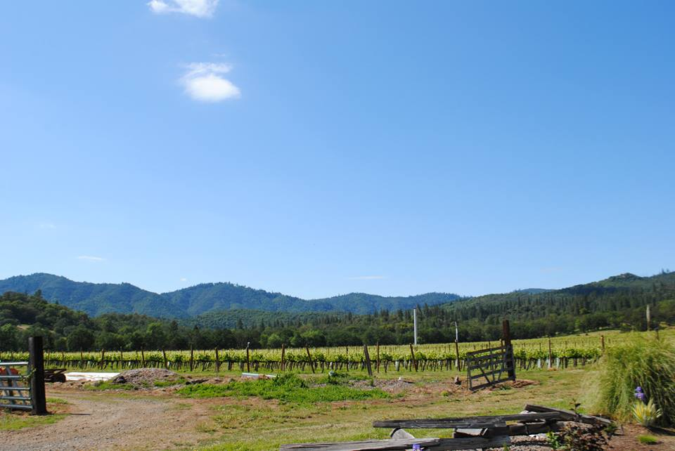 ROAM THE ROGUE - Seven Wineries, One Day - What to do in Southern Oregon - Things to do - Wine Tasting  - Upper Rogue Wine Trail - Cliff Creek Cellars