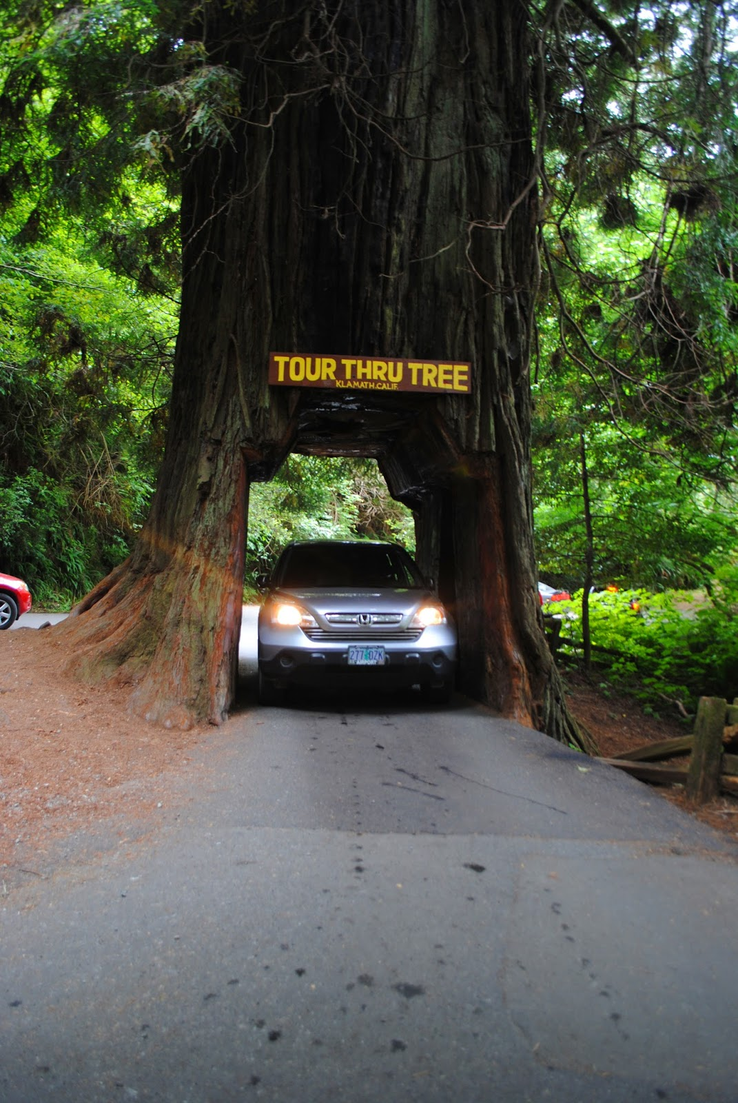 DRIVE-THRU REDWOOD TREE - Norhtern California - What to do in SOuthern ORegon - Camping - Kid-Friendly - Fun