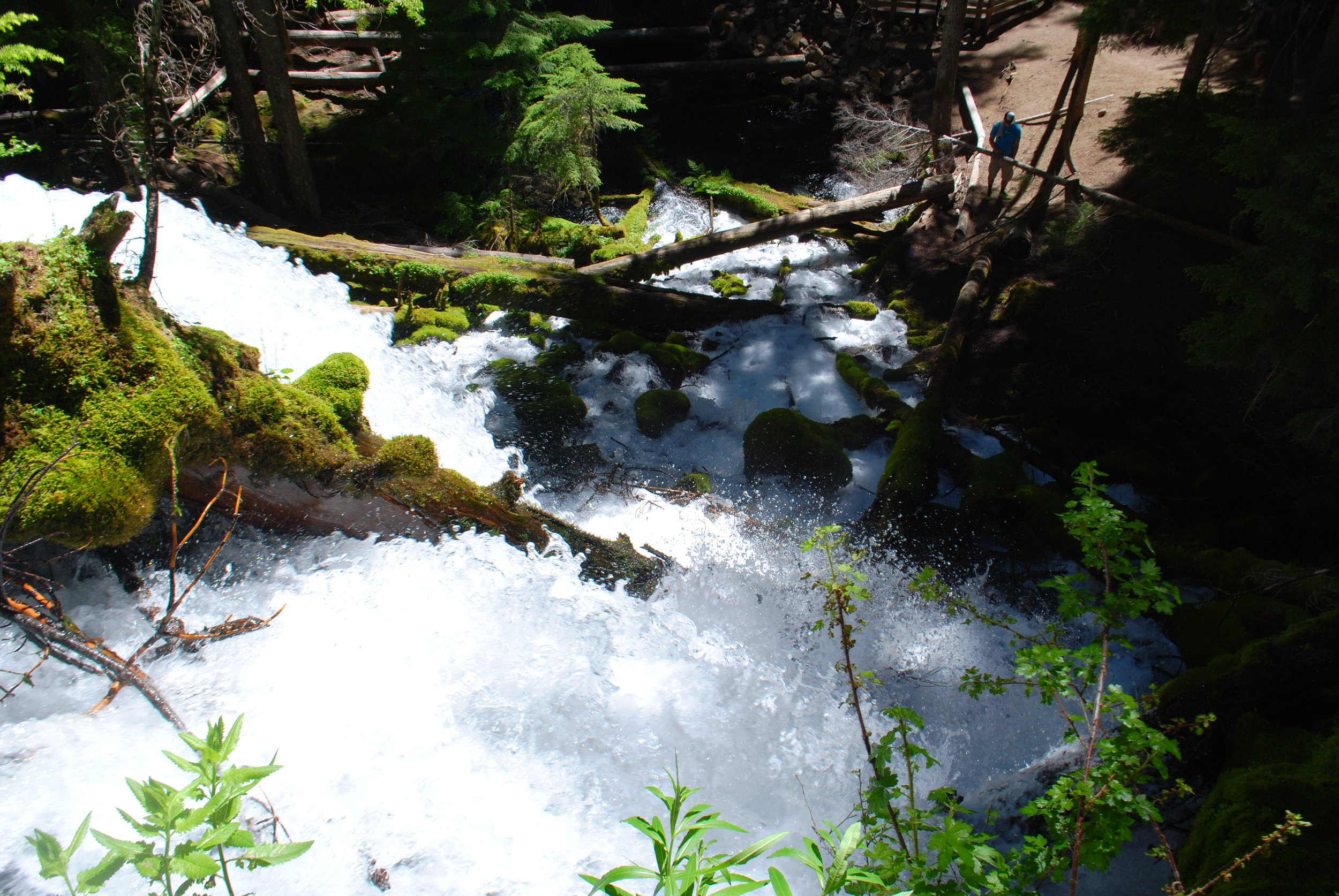 FOUR WATERFALLS, ONE DAY - HIKING ADVENTURES WITH KIDS - What to do in Southern Oregon - Things to do - Douglas County - Clearwater Fall