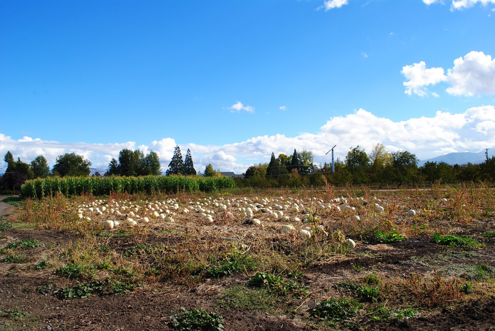 WHITES COUNTRY FARM - HARVEST FESTIVAL - What to do in Southern Oregon - Medford - Kids - Pumpkin Patch - Fall