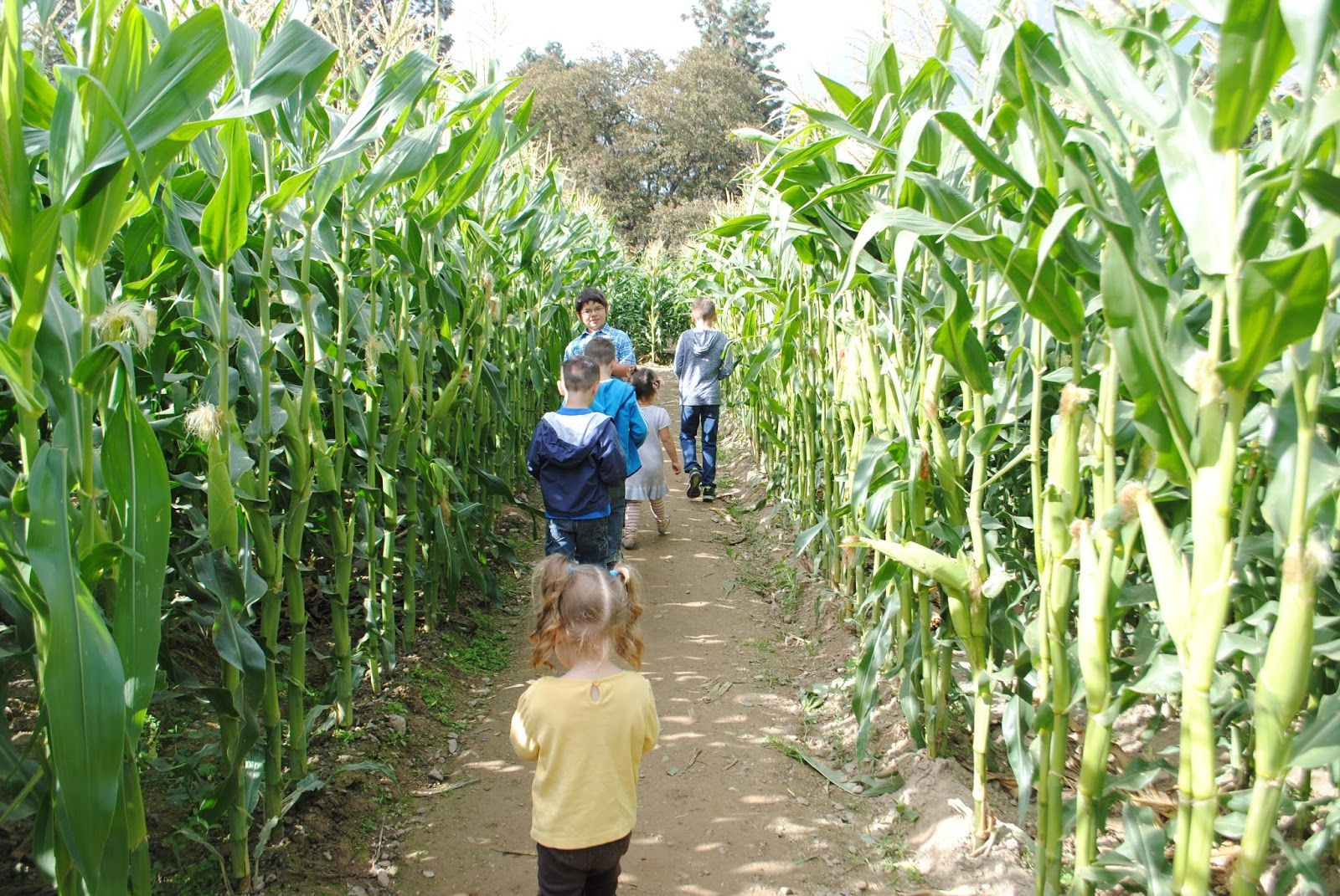 10 October Pumpkin Patch with Moon Family (39).JPG