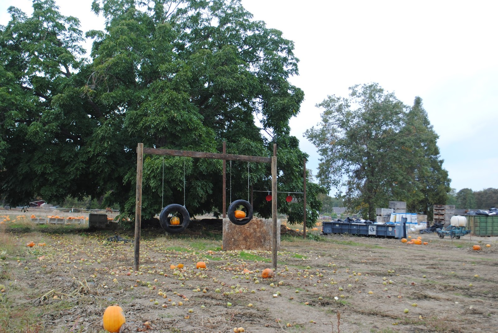 10 October Pumpkin Patch with Moon Family (75) (1).JPG