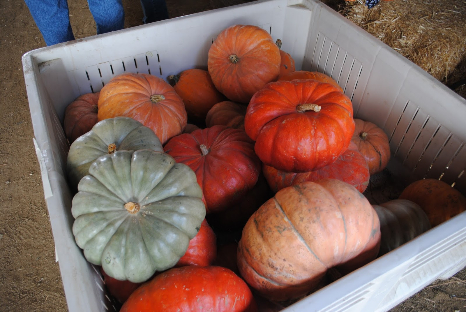 10 October Pumpkin Patch with Moon Family (76).JPG