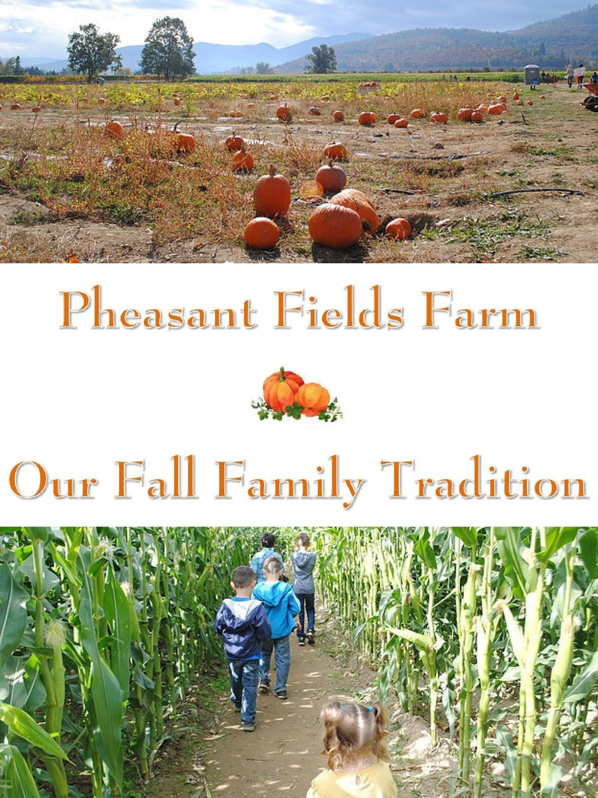 PHEASANT FIELDS FARM - Medford - Phoenis - Pumpkin Patches - Corn Maze - What to do in Southern Oregon - Kids - Fall