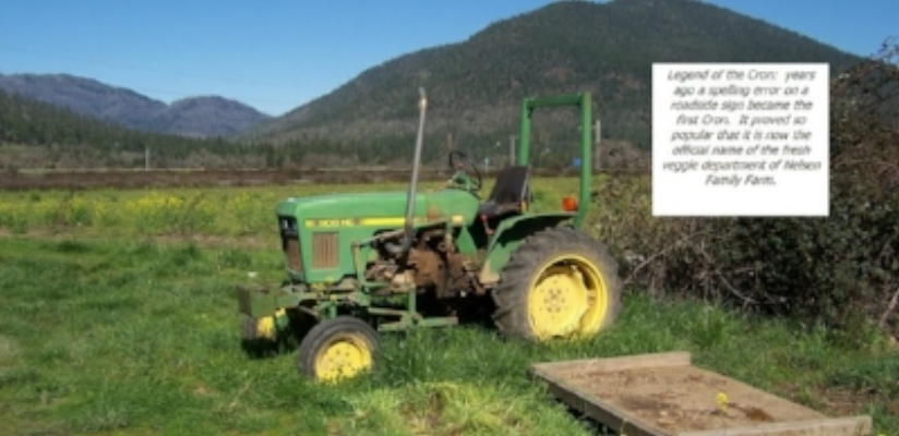 SWEET CRON PRODUCE - Pumpkin Patch - Kerby - What to do in Southern Oregon- Fall - Kids