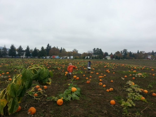 Brosi's Sugartree Farm  Pumpkin PatchPumpkin Patches - What to do in Southern Oregon - Fall - Kids - Winstont