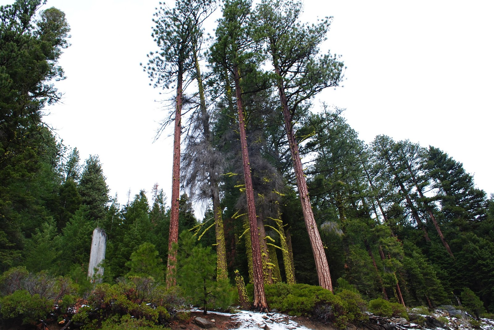 CHRISTMAS TREE HUNTING IN SOUTHERN OREGON - What to do in Southern Oregon - Travel Oregon - Snow