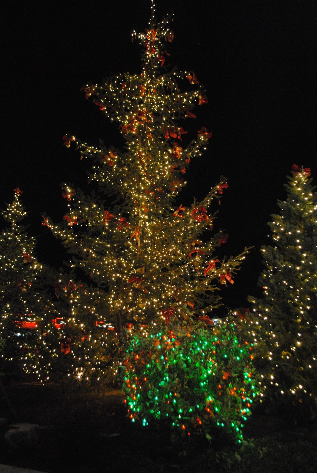 MEDFORD WINTER LIGHTS FESTIVAL - Candy Cane Hunt - Christmas - Santa
