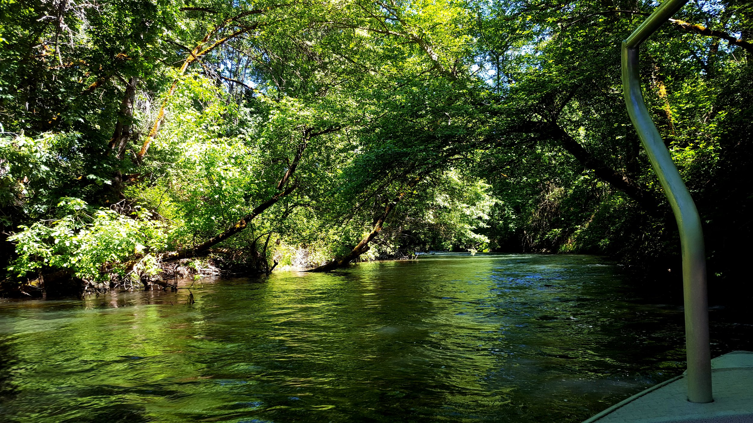 Jungle Cruise on the Rogue River. Flow Factory. Rogue Jet Boat Adventures. What to do in Southern Oregon.