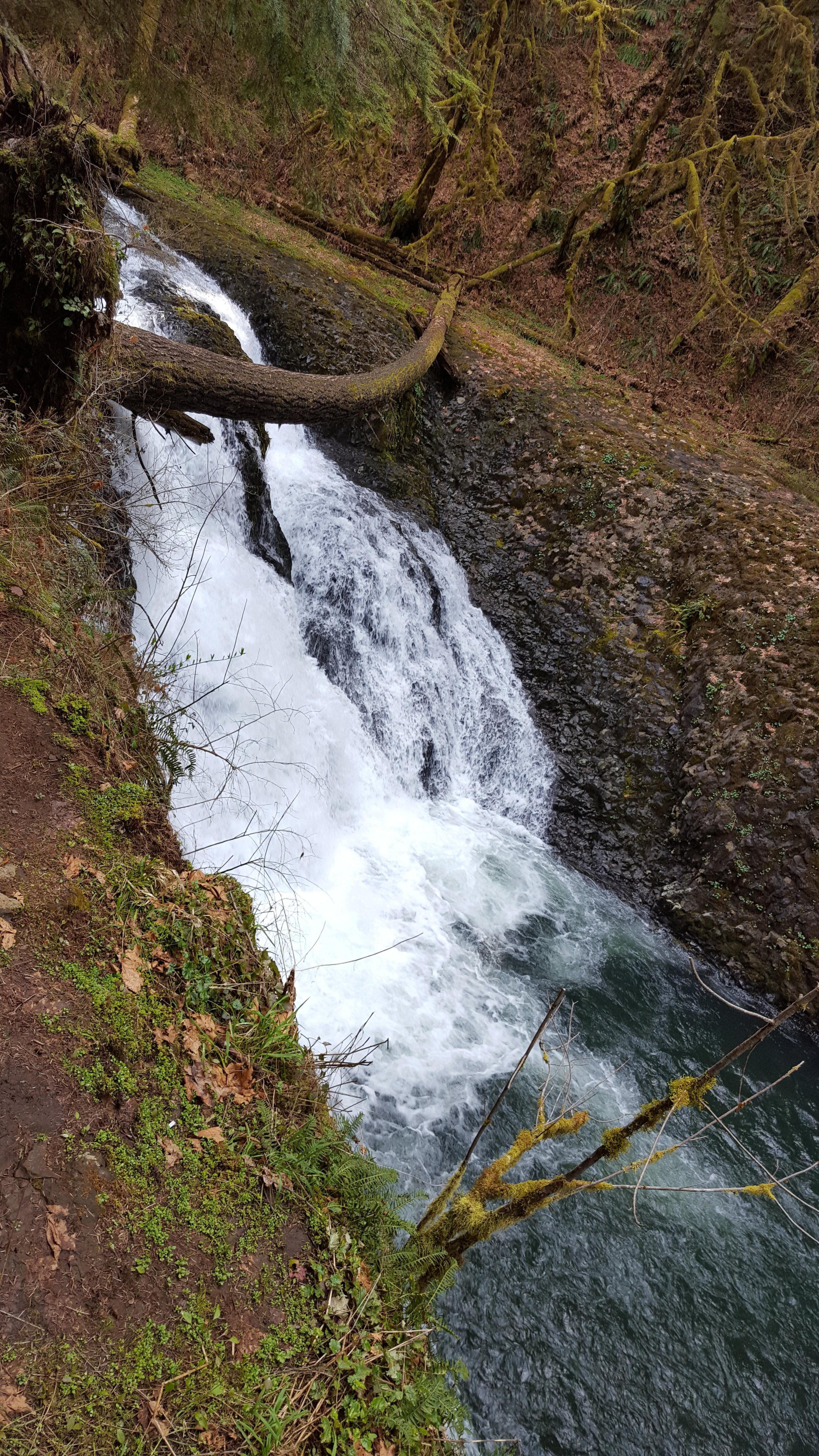 SILVER FALLS STATE PARK - Twin Falls - Oregon