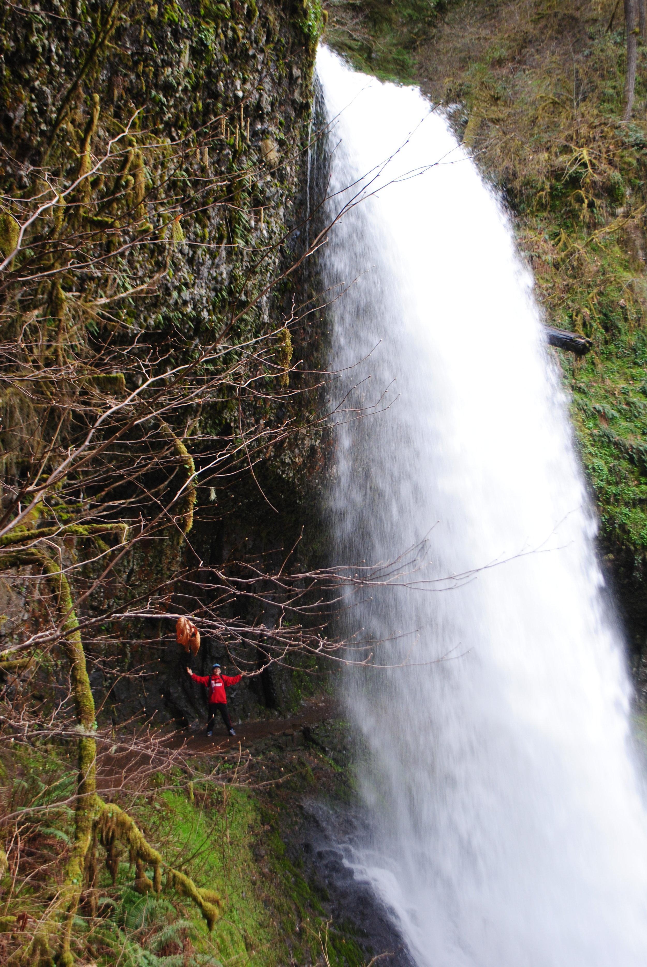 SILVER FALLS STATE PARK - Middle North Falls - Oregon