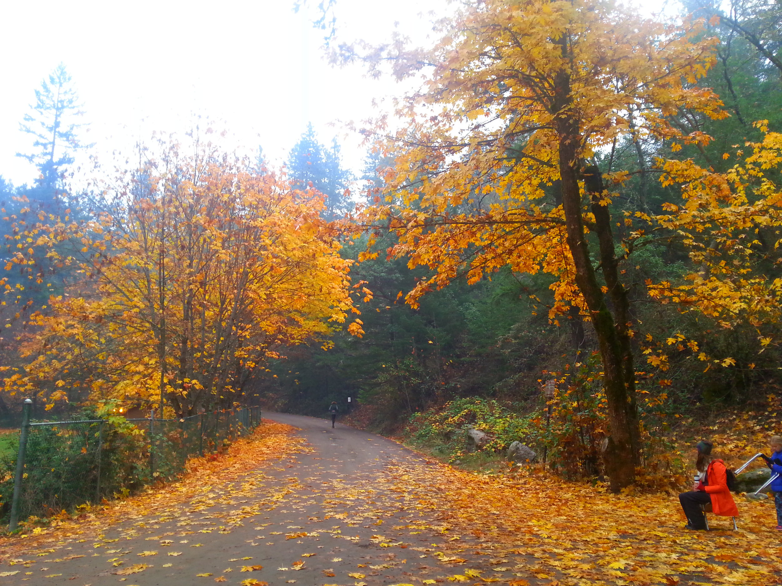 Bandersnatch - Ashland - Hiking - What to do in Southern Oregon