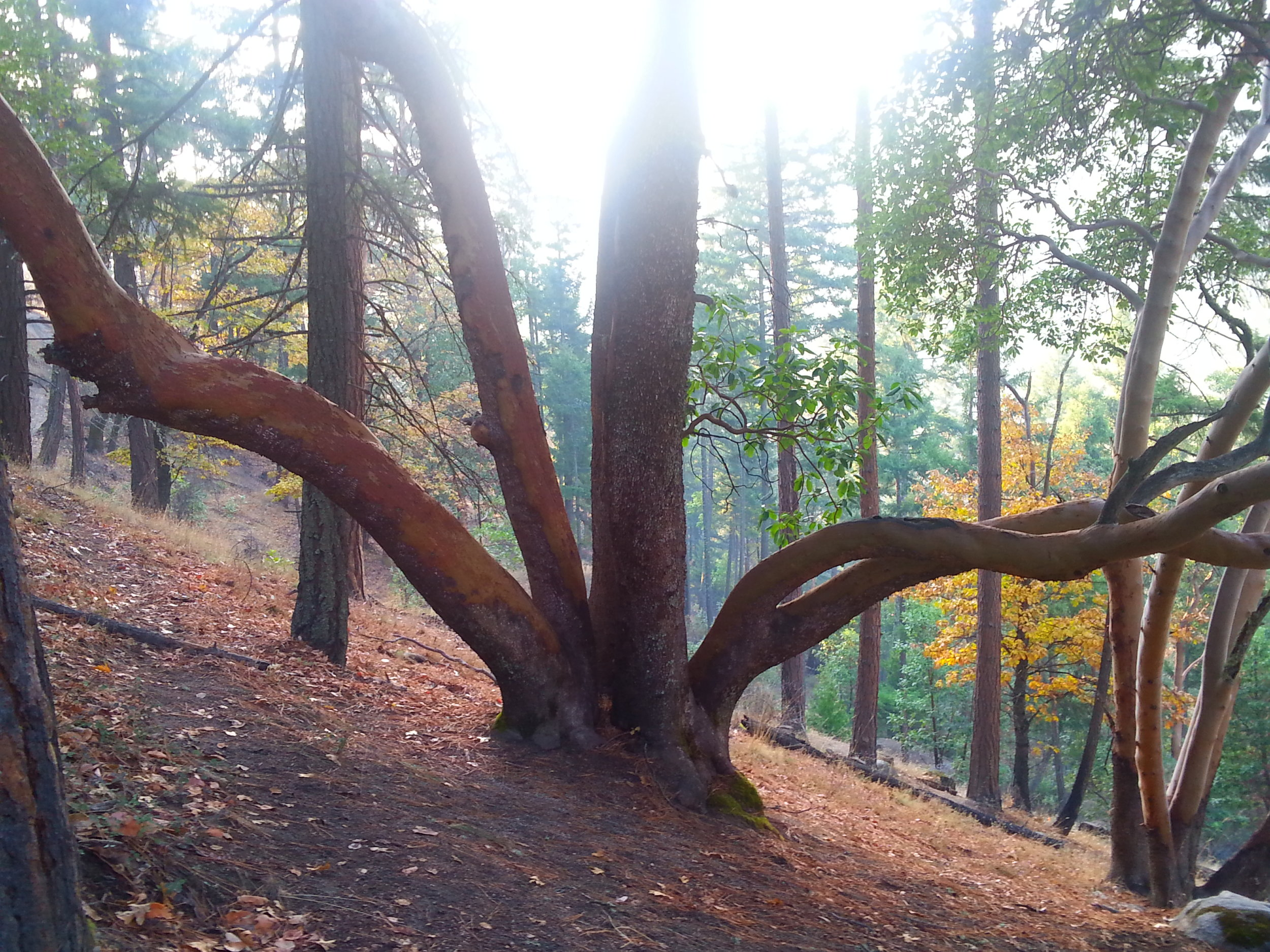 Bandersnatch - Ashland, Oregon - Hiking - What to do in Southern Oregon