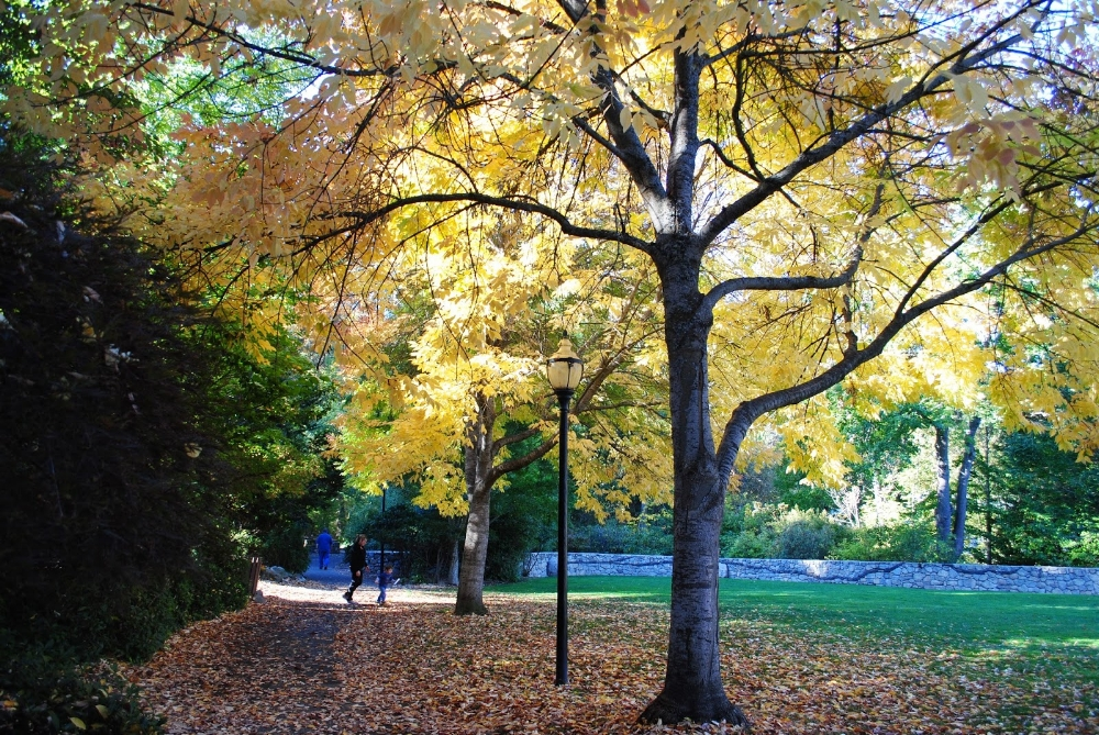 LITHIA PARK - Ashland - Fall - What to do in Soutehrn Oregon