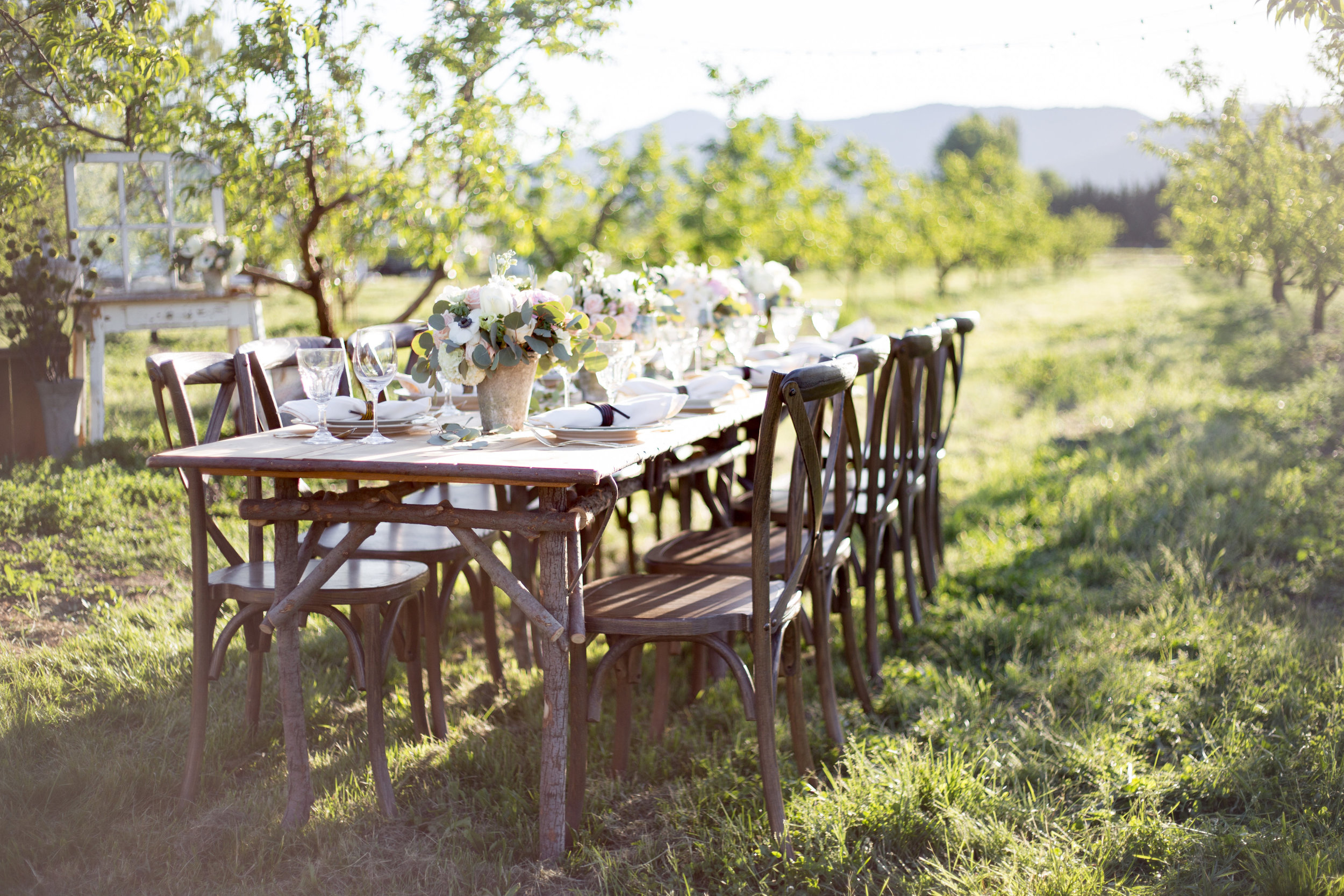 Evening in the Orchard at Whites Country Farm