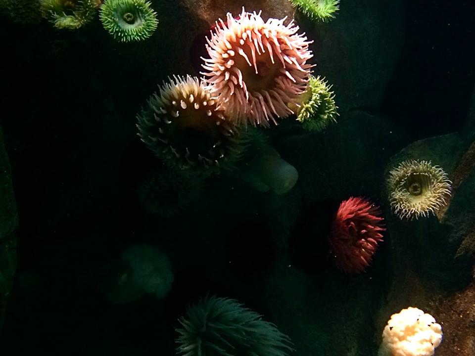 underwater garden ii