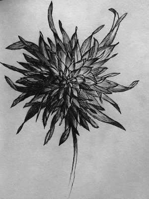 dahlia pen and ink