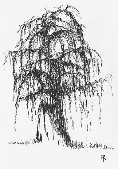willow pen and ink