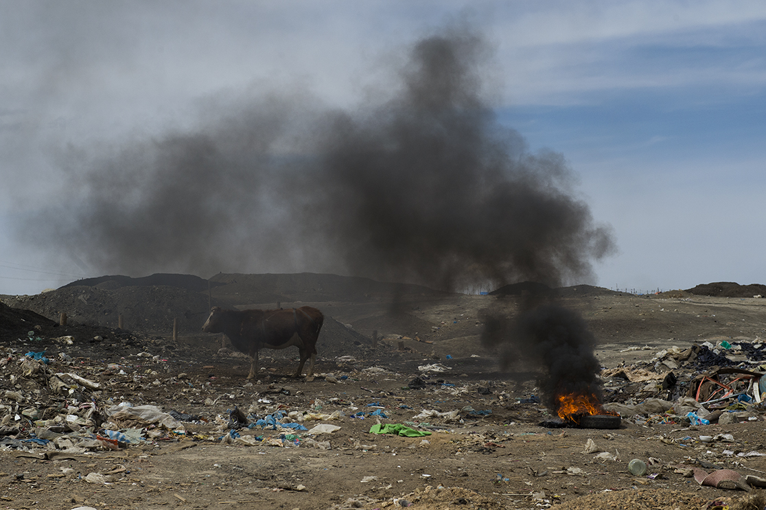 A cow looks for food on a mountainous rubbish dump in the Nalaikh coal mine site on April 14, 2016.