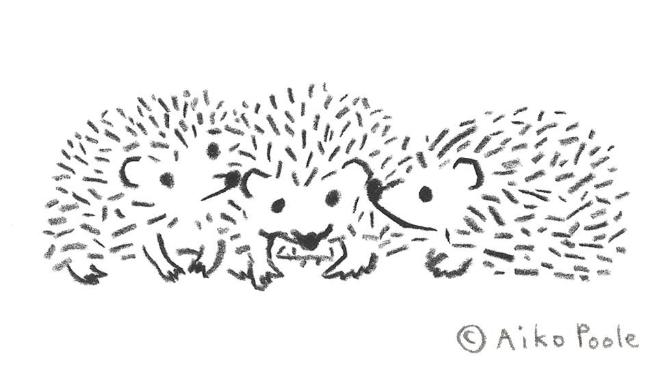 hedgehog-b.jpg