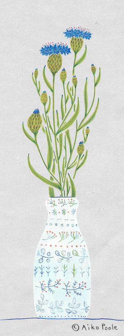 cornflower-b.jpg