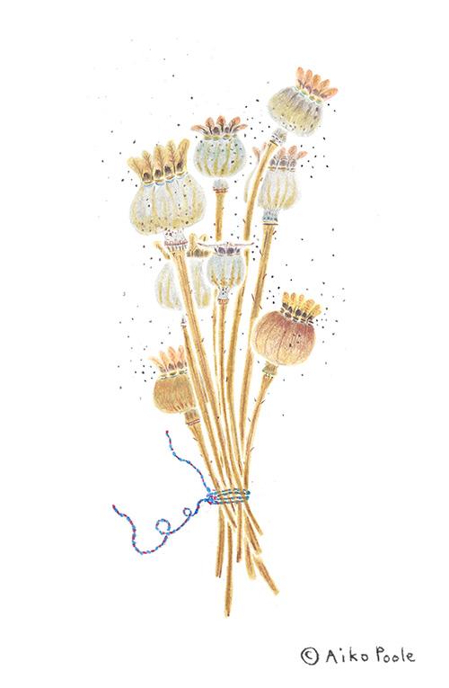 poppypods-b.jpg