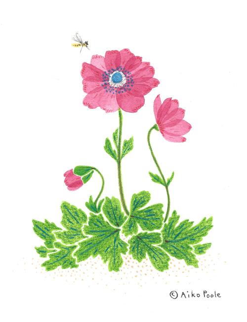 anemone-b.jpg