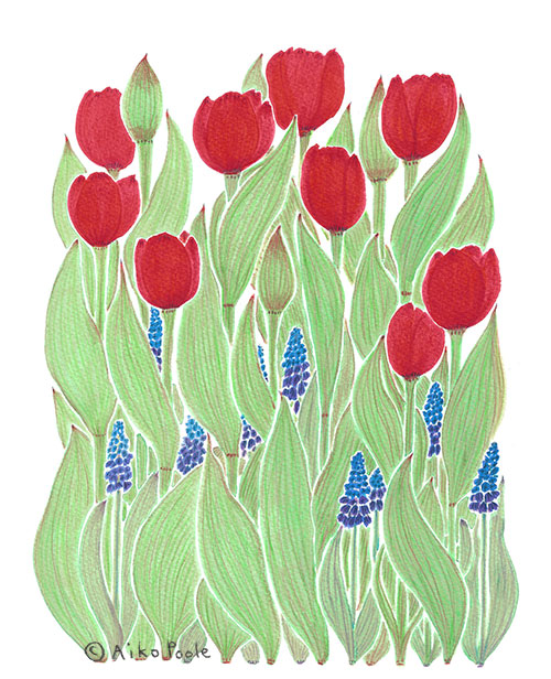_tulip-b.jpg