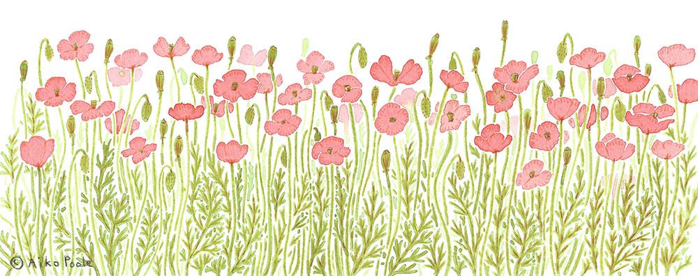poppies-b.jpg