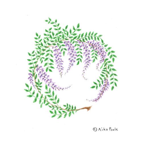 wisteria-b.jpg