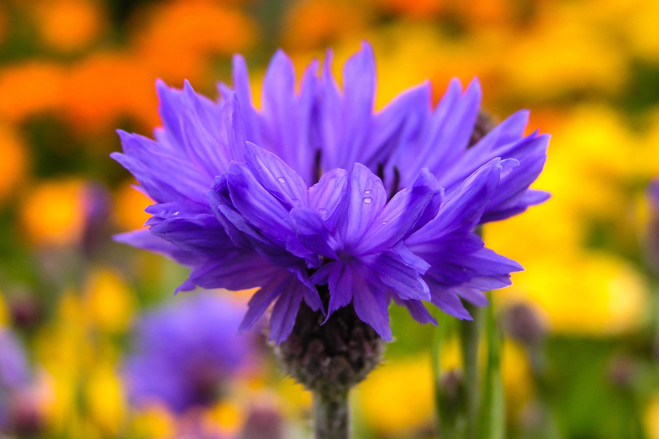 Flowers to Print.jpg