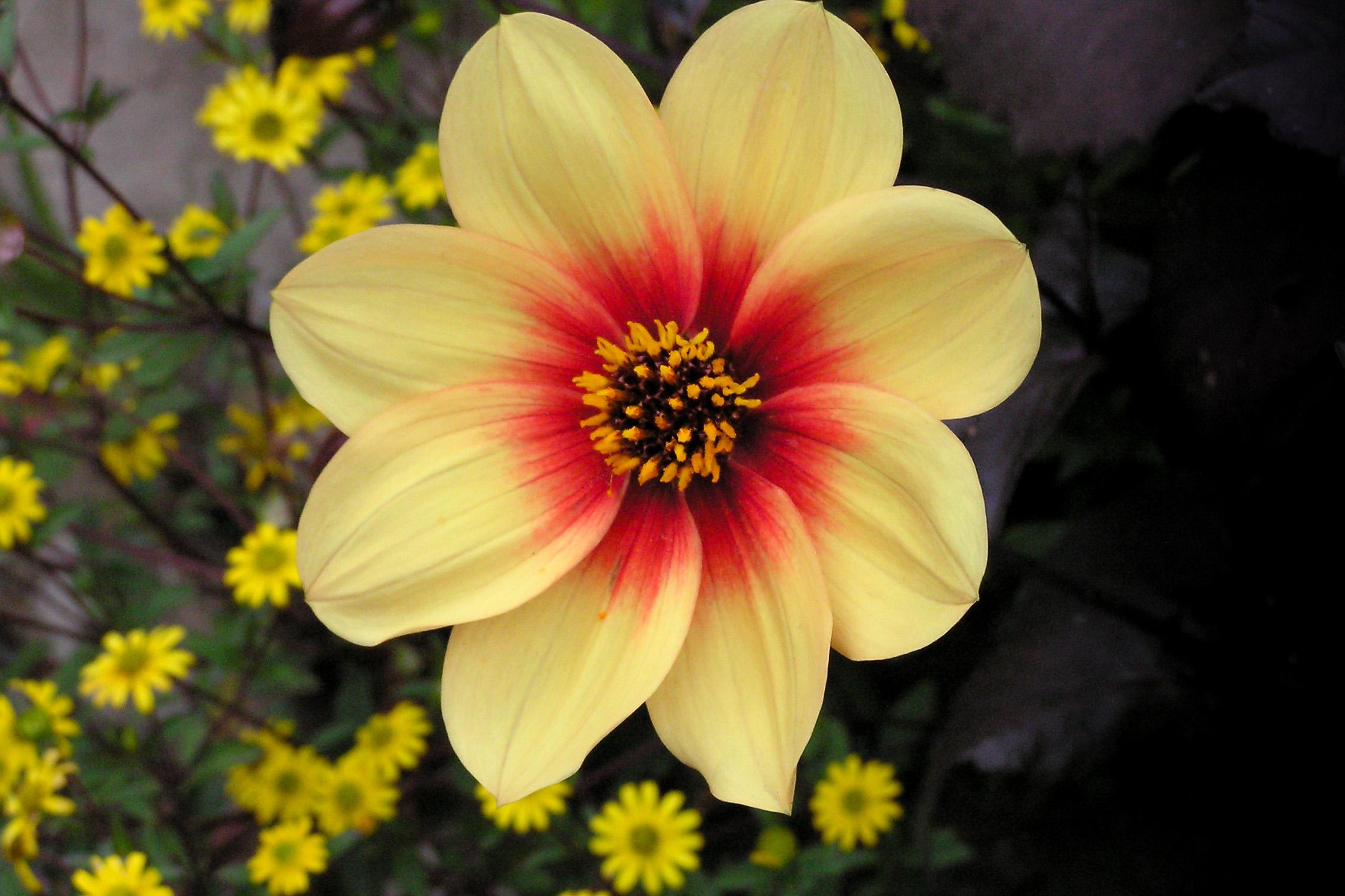 Flowers to Print-3.jpg
